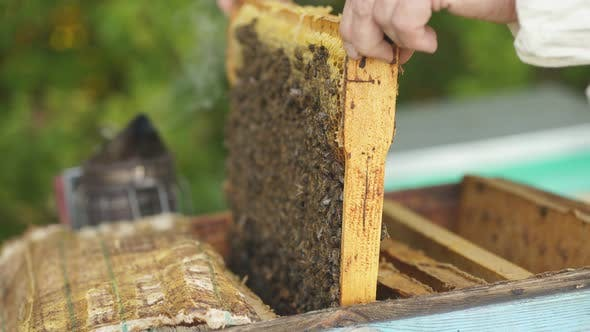 Apiarist Working with Bees and Beehives on Apiary