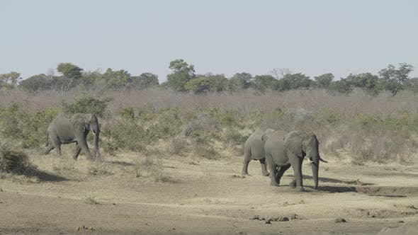 Thumbnail for African Elephants on the Move
