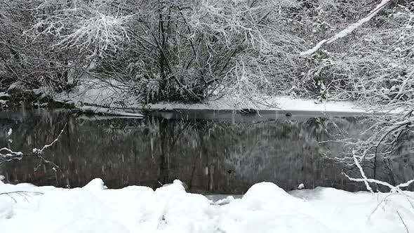 Thumbnail for Winter Forest - Snowy River