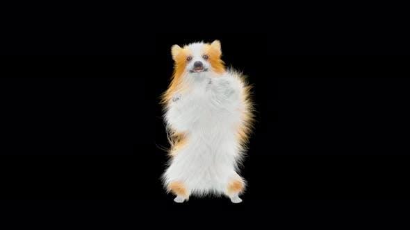Thumbnail for Hund tanzen 4K