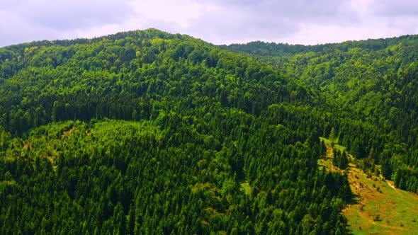 Drone Flying Above Bright Greenwood Forest