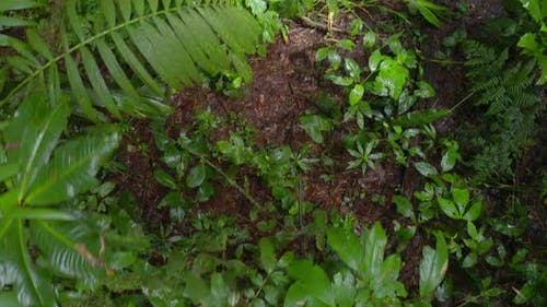 Top view background of a tropical forest floor covered in different plants