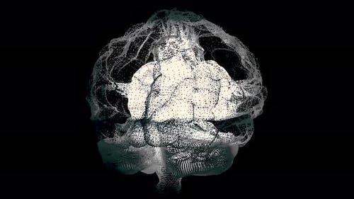 Menschliches weißes Gehirn auf Schwarz, wissenschaftlicher Anatomie-Hintergrund