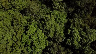 Aerial Top Down View Forest Woodland Aerial