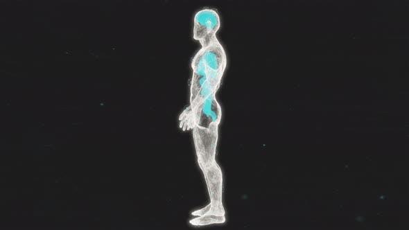 Human Body Anatomical X-Ray
