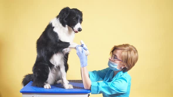 Thumbnail for Professional Vet Takes Care of Dog's Paws