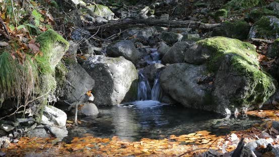 Thumbnail for Little Forest Waterfall