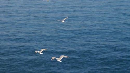 Drei Möwen fliegen in blauem Himmel. Möwen fliegen hoch in wolkenlosem Himmel. Greifvögel Fliege in Klar