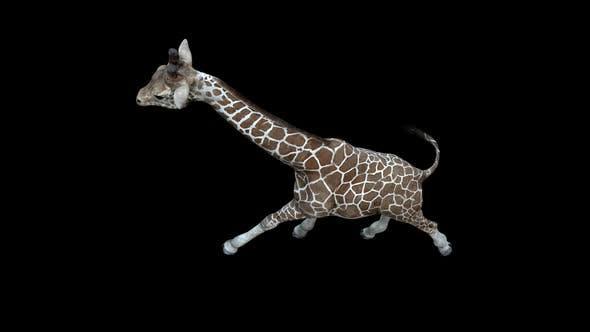 Thumbnail for Giraffe Run Top