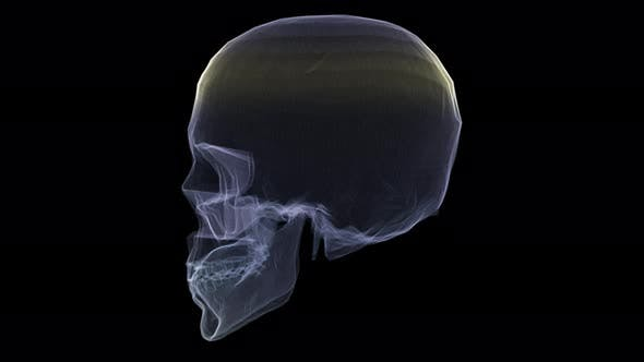 Futuristic Holographic X-ray Scanning Human Body Part - Skull