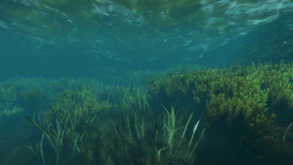 Unter Wasser Seegras