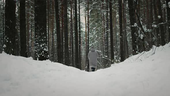 Thumbnail for Doing A Nordic Walk in forest