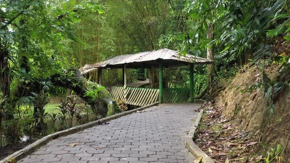 Thumbnail for Paved pedestrian path in tropical garden with a beautiful footbridge