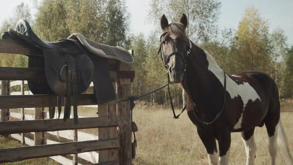 Next To Wooden Fence Countryside Stands Brown Horse White Back Legs Against Forest Background