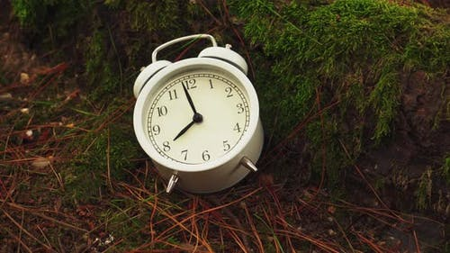White old alarm clock with hour and minute hands in the roots of an old coniferous tree