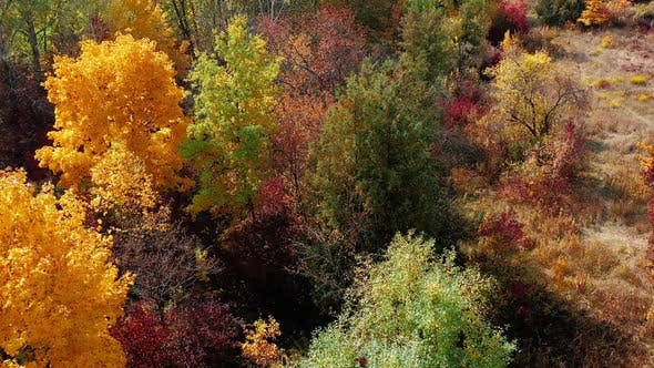 Thumbnail for Top View of Beautiful Forest with Colorful Trees of Yellow Light Green Burgundy Color. Aerial Shot