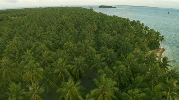 Thumbnail for Flying Over Rustling Treetops of Lush Green Palm Trees on Tropical Island