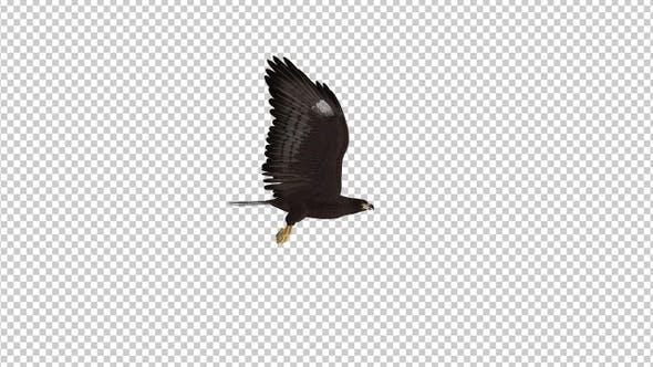 Black Hawk - Flying Loop - Side View