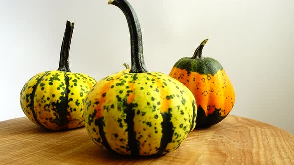 Thumbnail for Pumpkins on a White Background