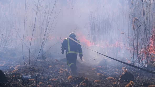 Firefighters in Equipment Extinguish Forest Fire with Fire Hose. Slow Motion