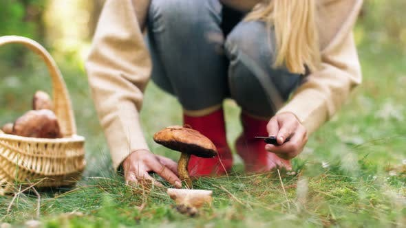 Thumbnail for Young Woman Picking Mushrooms in Autumn Forest 16