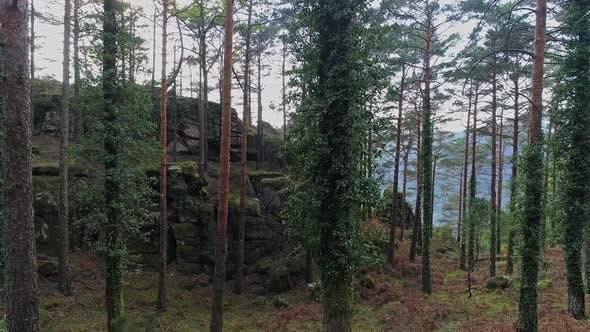 Thumbnail for Trees