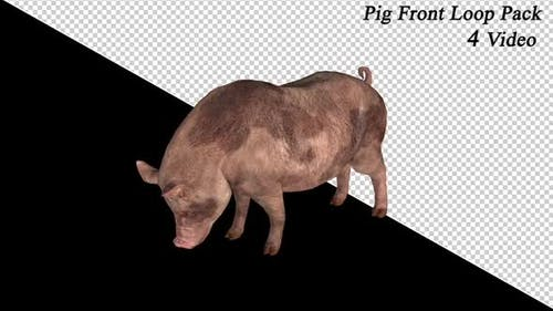 Pig Front View Pack