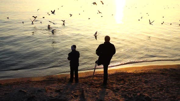 Cover Image for People Feed Seagulls