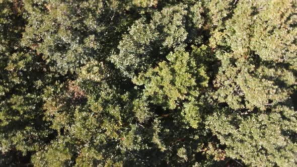Forest Nature Drone