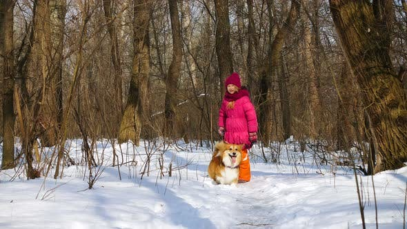 Thumbnail for Funny Corgi Fluffy Puppy Walking With Little Girl Outdoors