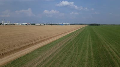 Ripe Grain Field. The Border Of A Field With A Green Meadow Is Visible.
