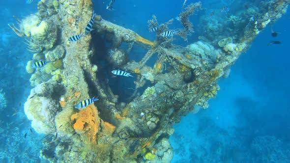 "Skeleton Wrecked Japanese Military Gunboat ""Tangat"" From the Second World War in the Coron Bay"