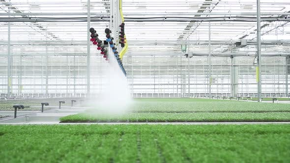 Agriculture Farm Plant Hydroponic Greenhouse Shot of Watering Green Lettuce on Plantation Using
