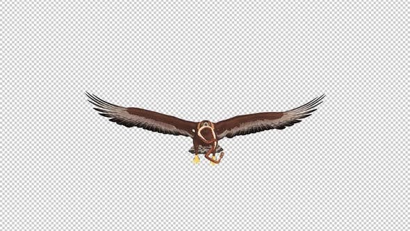 Golden Eagle With Snake - Flying Loop - Front View
