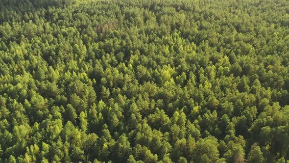 Aerial View Of Green Forest Landscape