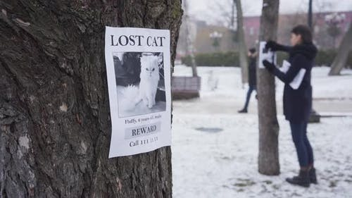 Blurred Caucasian Woman Hanging Missing Cat Ads on Trees, One Advertisement Is on the Foreground