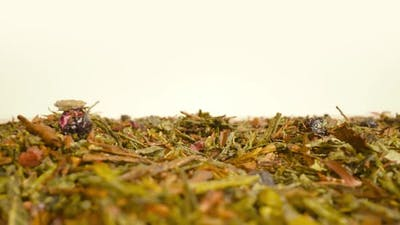 Green Tea Leaves Scattered on the Table