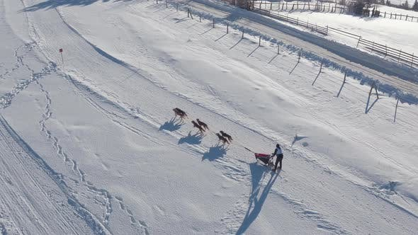 Thumbnail for Aerial view of a dog sled in the snow