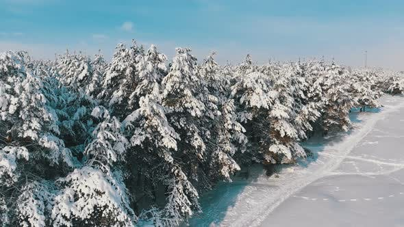 Thumbnail for Aerial View on Winter Pine Forest and Snow Path on a Sunny Day