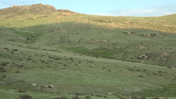 Thumbnail for Wild Przewalski's Horses in Natural Habitat in The Geography of Mongolia