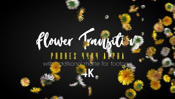 Flower Transition