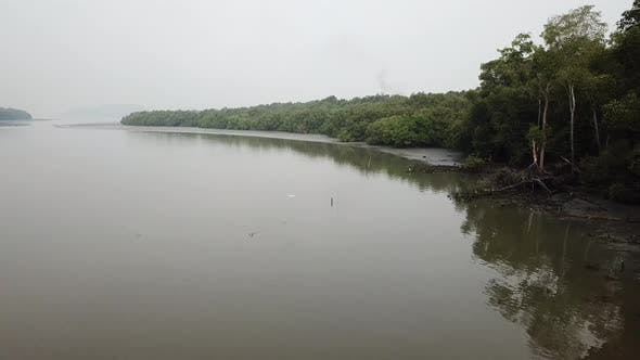 A white bird fly over the coastal near mangrove forest at Malaysia.