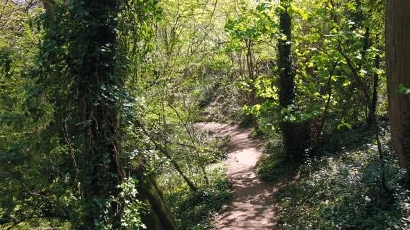 Backwards through a Forest Path