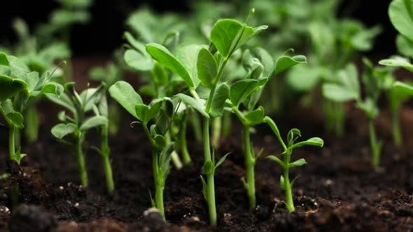 Thumbnail for Plant Time Lapse