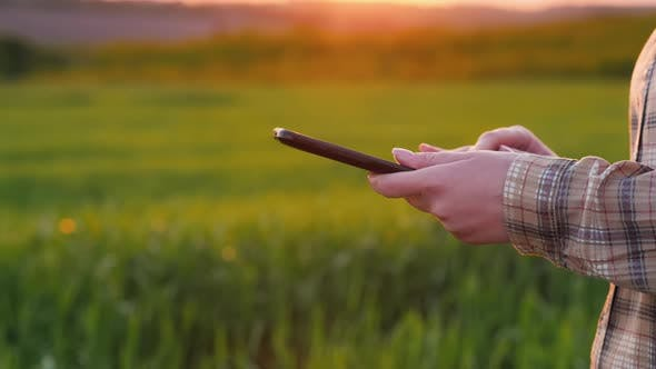 Thumbnail for Farmer's Hands with a Tablet Against the Background of a Green Wheat Field