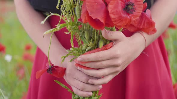 Cover Image for Unrecognized Female Hands Holding Bouquet of Flowers in a Poppy Field. Connection with Nature. Green