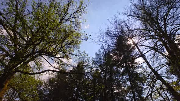 Thumbnail for Spring Sun in Forest