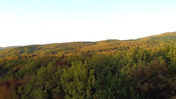 Thumbnail for Top view of the mountain forest in autumn