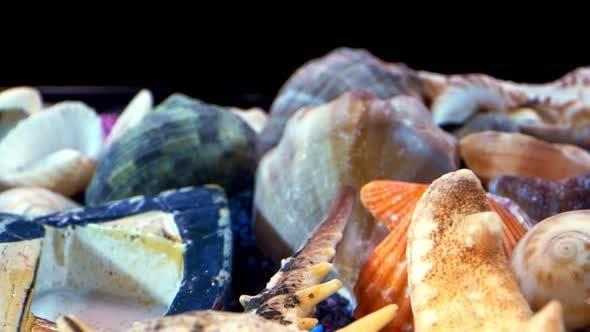 Coquillages de mer séchés sur sable coloré