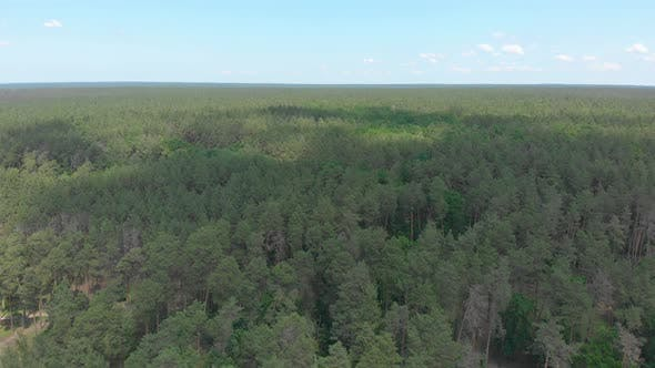 Thumbnail for Aerial Pine Forest Summer